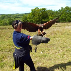 Falconry Liverpool